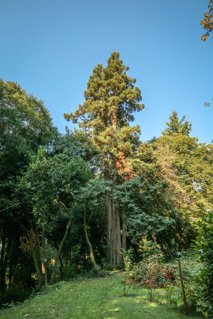 Les sequoias du Parc centenaire proche du gite