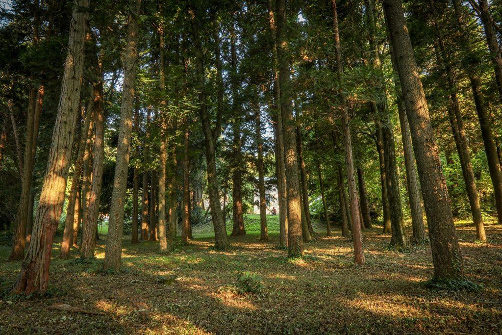 Le forêt du parc avec des arbres centenaires plantés par mon grand père